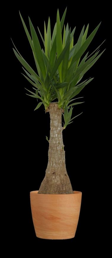 Verzorging - Maya-Tree